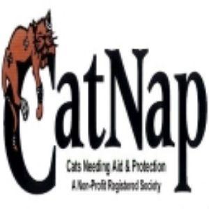 CatNap Society Logo