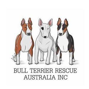 Bull Terrier Rescue Australia Logo