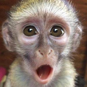 Friends of the Vervet Monkey Foundation Logo