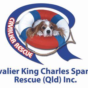 Cavalier King Charles Spaniel Rescue Qld Inc Logo
