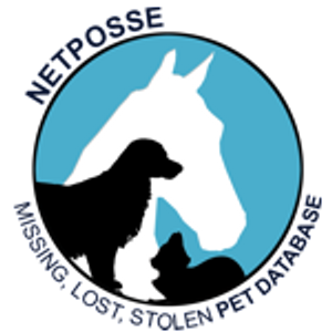 Stolen Horse International Logo