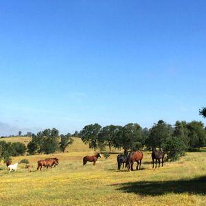 Amador County Equine Sanctuary Logo