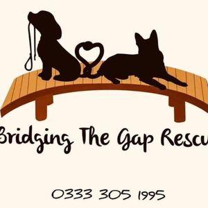 Bridging The Gap Rescue Logo