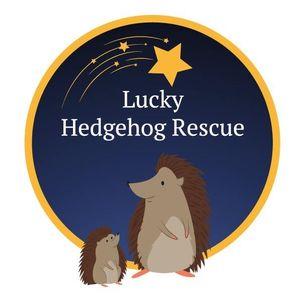 Lucky Hedgehog Logo