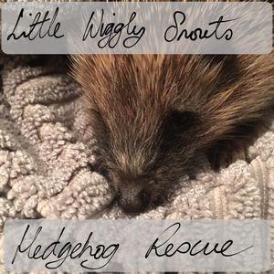 Little Wiggly Snouts Hedgehog rescue Rushden Logo