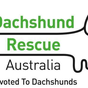 Dachshund Rescue Australia Inc Logo