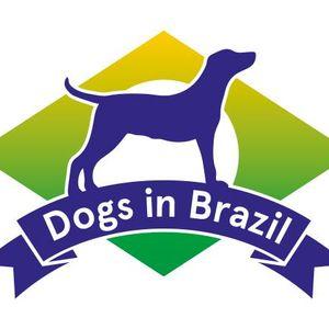 Dogs in Brazil Logo