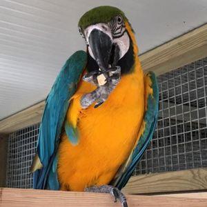 Isle of Man parrot sanctuary Logo
