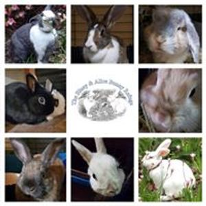 The Bluey & Alice Bunny Refuge Logo
