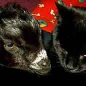Gunyah Animal Healing Sanctuary Inc Logo