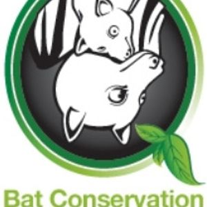 Bat Conservation and Rescue Qld Inc Logo