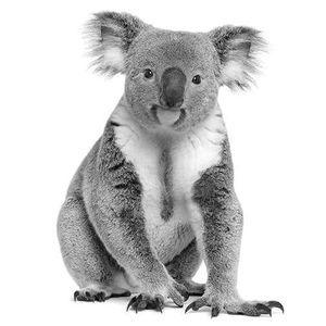 Bangalow Koalas INC. Logo
