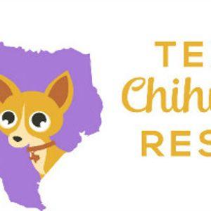 Texas Chihuahua Rescue, Inc Logo
