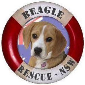 Beagle Rescue NSW Inc Logo
