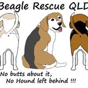 Beagle Rescue Qld Logo