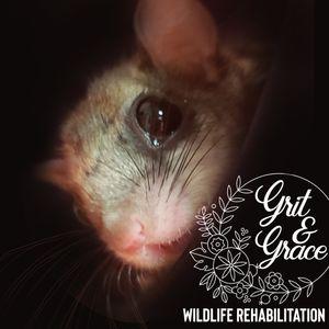 Grit & Grace Wildlife Rehabilitation Inc Logo