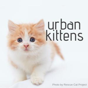 Urban Kittens Rescue Group Logo