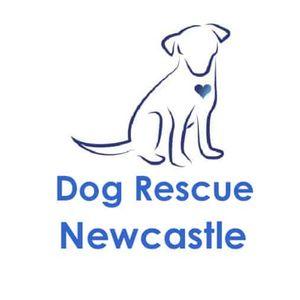Dog Rescue Newcastle Logo