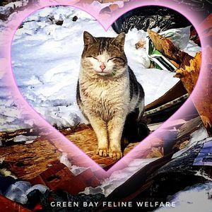 Green Bay Feline Welfare Logo