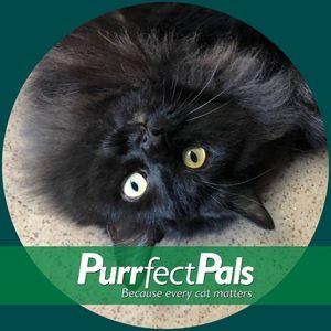 Purrfect Pals Cat Sanctuary and Adoption Centers Logo