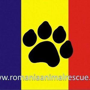 Romania Animal Rescue inc dba Animal Spay Neuter International Logo