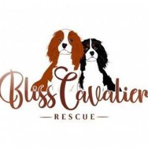 Bliss Cavalier Rescue Logo