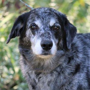 Grateful Acres Pets Sanctuary and Adoption Logo