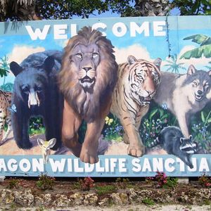 Octagon Wildlife Sanctuary Logo