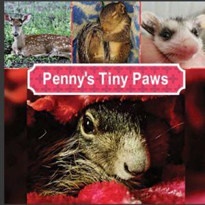 Pennys Tiny Paws Logo