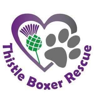 Thistle Boxer Rescue Logo