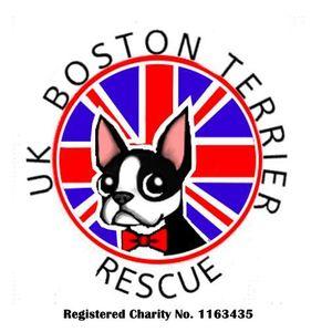 Uk Boston Terrier Rescue Logo
