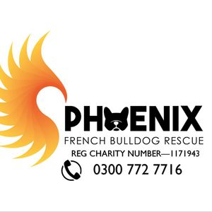 Phoenix French Bulldog Rescue Logo