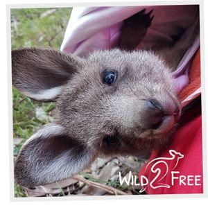 Wild 2 Free Inc. Logo