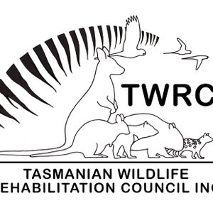 Tasmanian Wildlife Rehabilitation Council Inc Logo