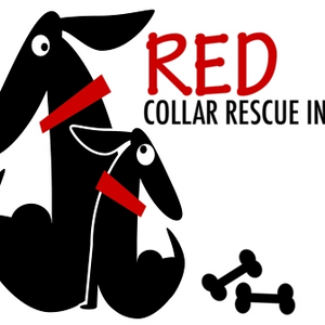 Red Collar Rescue Incorporated Logo