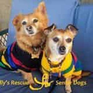 Holly's Rescue for Senior Little Dogs Logo