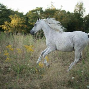 Liberty acres equine rescue and sanctuary Logo