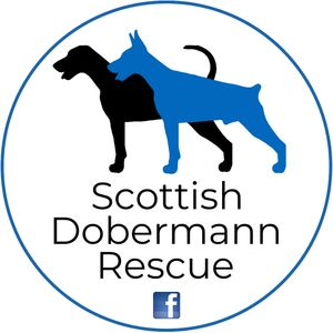 Scottish Dobermann Rescue SCIO sc049197 Logo