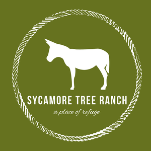 Sycamore Tree Ranch Logo