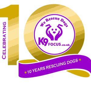K9focus Logo