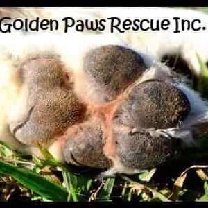 Golden Paws Rescue Inc Logo