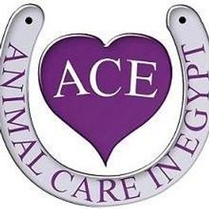 Animal Care in Egypt ACE Logo