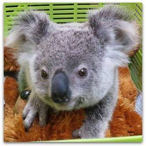 Fauna Rescue Whitsundays Association Inc Logo