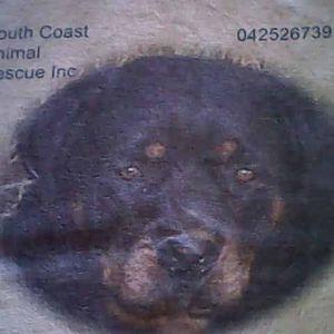 South Coast Animal Rescue Inc Logo