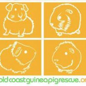 Gold Coast Guinea Pig Rescue Logo