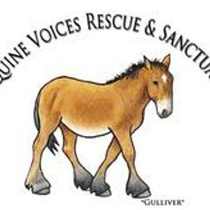 Equine Voices Rescue & Sanctuary Logo