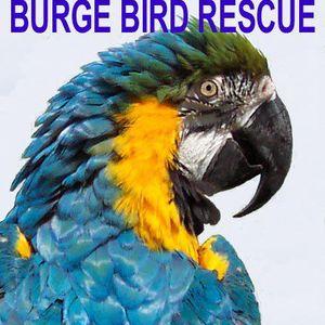Burge Bird Services & Rescue Logo