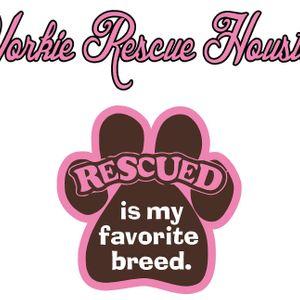 Yorkie Rescue Houston Logo