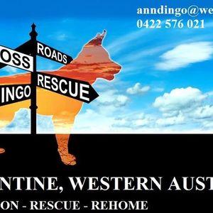 Crossroads Dingo Rescue Logo