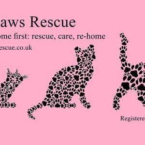 Little Paws Rescue Cats Logo